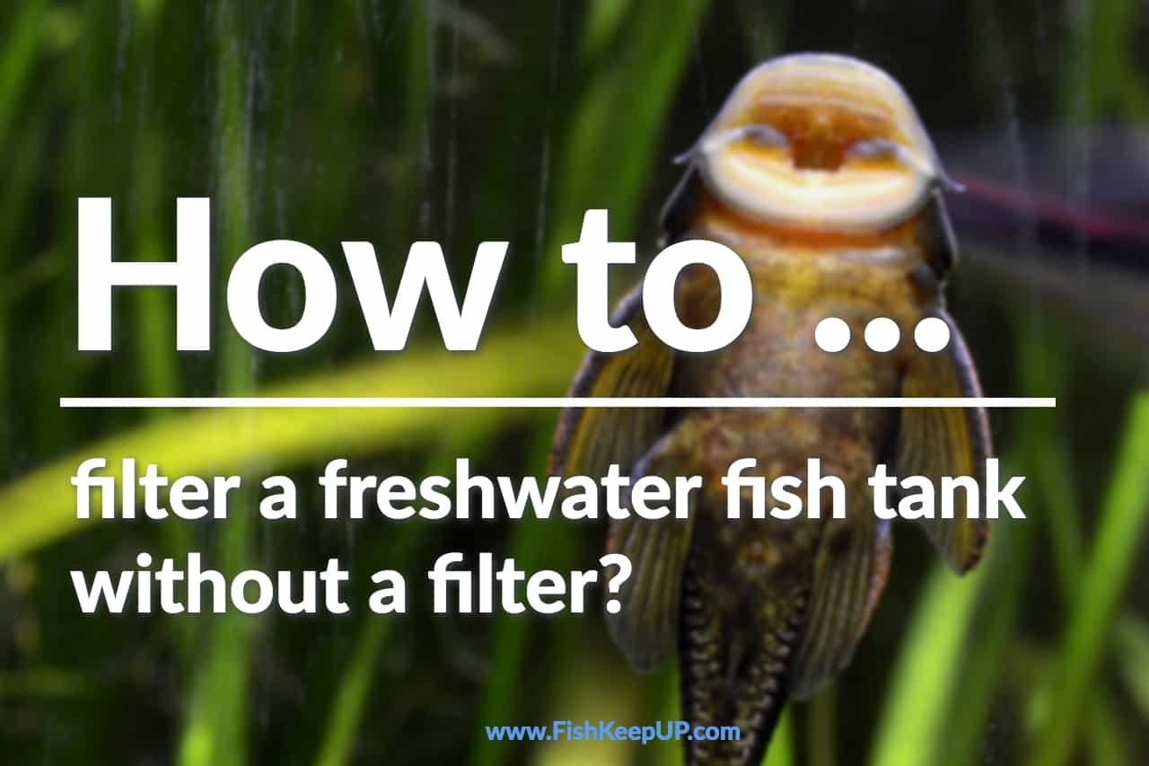 How to filter a freshwater fish tank without a filter so fish do not ...